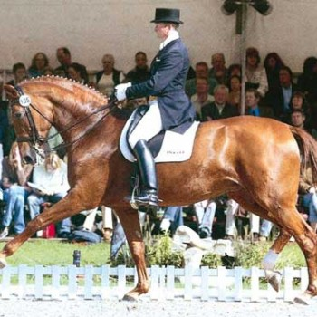 Pferdezuchtverein Aller Leine